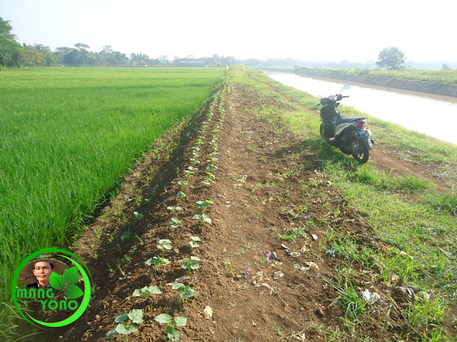 Normalisasi Sungai Bendungan Macan – Binong merugikan warga.