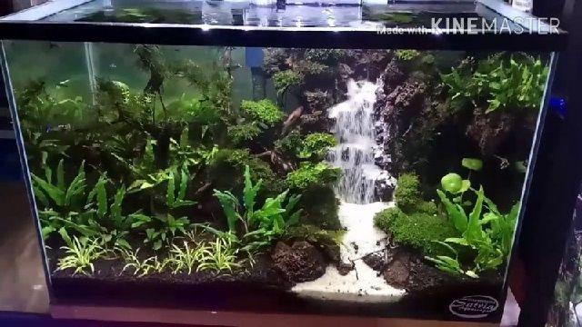 Membuat Tebing Air Terjun Paludarium