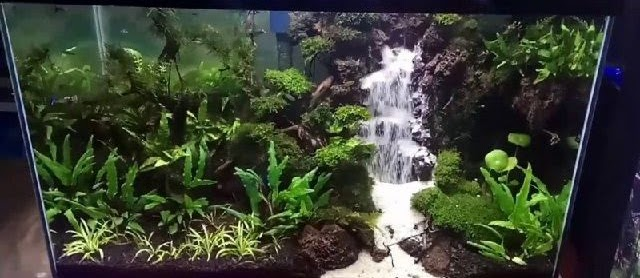 Cara Membuat Tebing Air Terjun Paludarium dan Akuarium