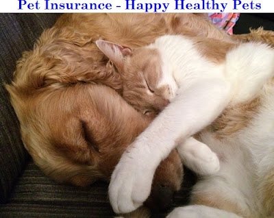 Pet Health Insurance - Pet Insurance - Multiple Carriers - EasyInsuranceGroup.com