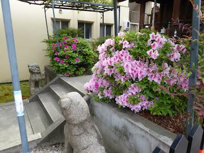 春日神社 ツツジと狛犬