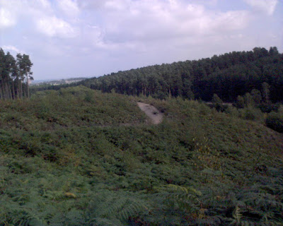 Trail view of Cannock chase Staffordshire - by: © Paul c Walton