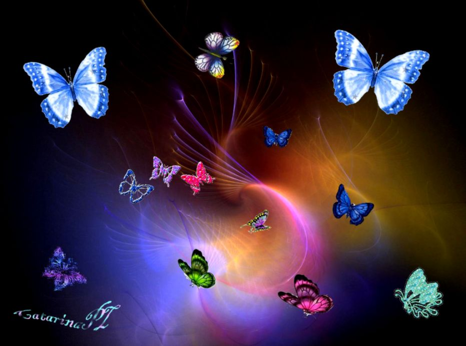 Beautiful Color Butterfly Wallpapers Hd Mobile Wallpapers