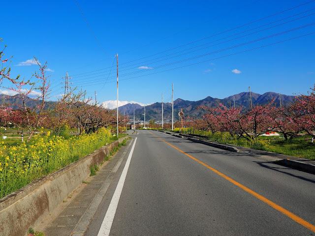 山梨市 菜の花 桃