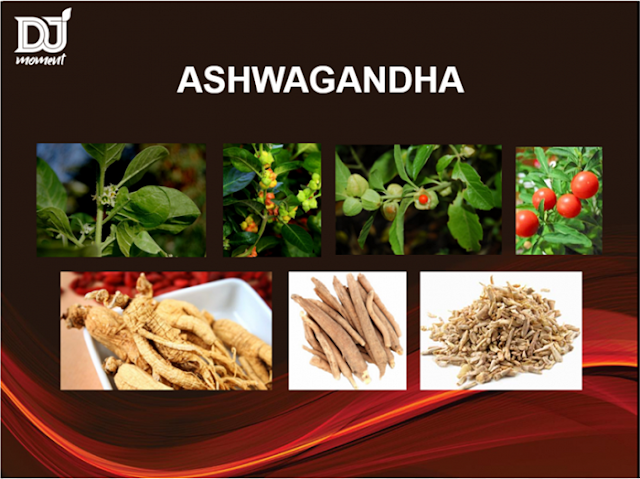 "Ashwagandha means ""the smell of a horse,"""