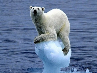 Nestor Chayelle: Global Warming Affecting Animals