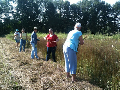 Bundling flax at Landis Valley