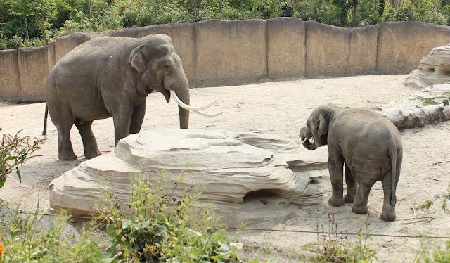 IMG 4058 - Wildlands Adventure Zoo Emmen