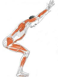 yoga to your core muscular system  functions and yoga
