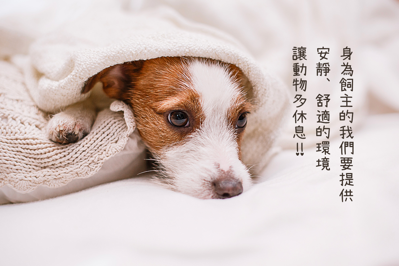 Petzoo聯誠寵物部落格: 腎臟病的治療--我們可以為家中寶貝做什麼呢?------聯信寵物獸醫--張醫師