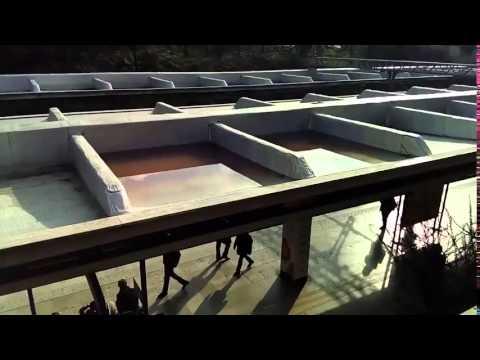 Siamo ponti ad ospitare paperelle a Piramide (video)