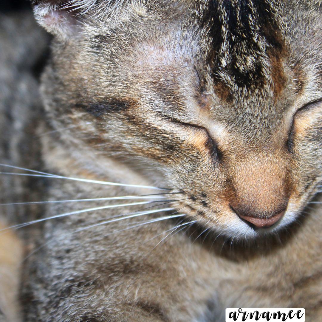 Fotografi: Gambar kuci...