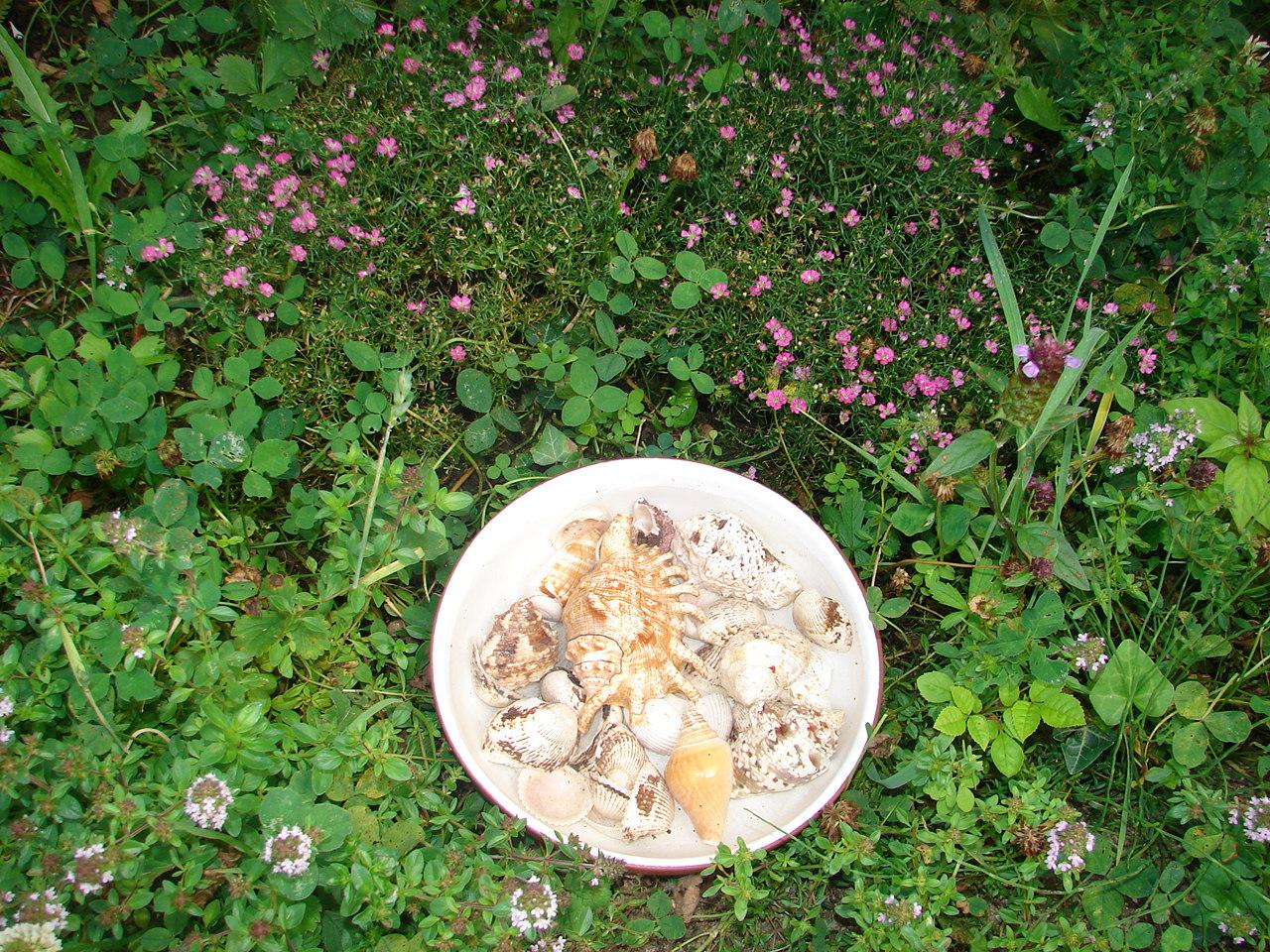 Bodenseegarten: Insektentränke!