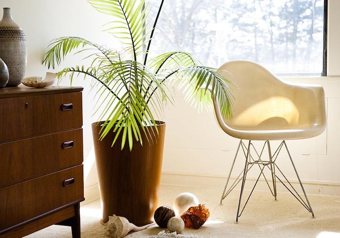 plantas que resisten en otoño