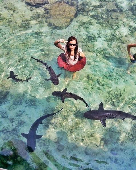 Berenang di Pantai Bareng Ikan Hiu? Yuk Rasakan Sensasinya Berwisata Ke Pulau Menjangan Besar Karimunjawa