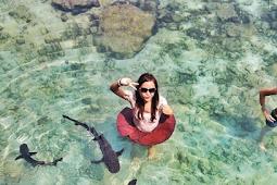Berenang Bareng Hiu? Rasakan Sensasnya Di Karimunjawa
