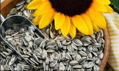 Gambar Biji Bunga Matahari