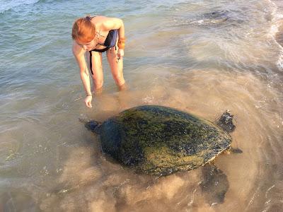 Хіккадува, черепаха