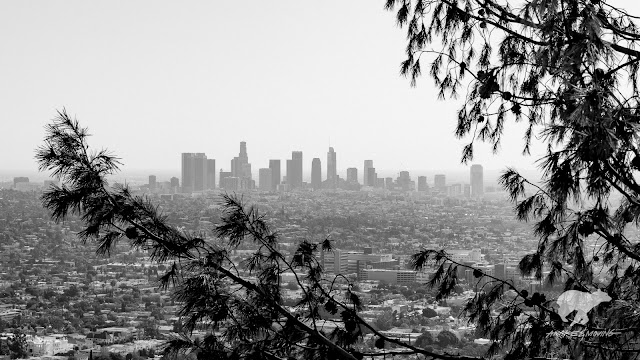 The view from Griffith Park. Los Angeles, CA.