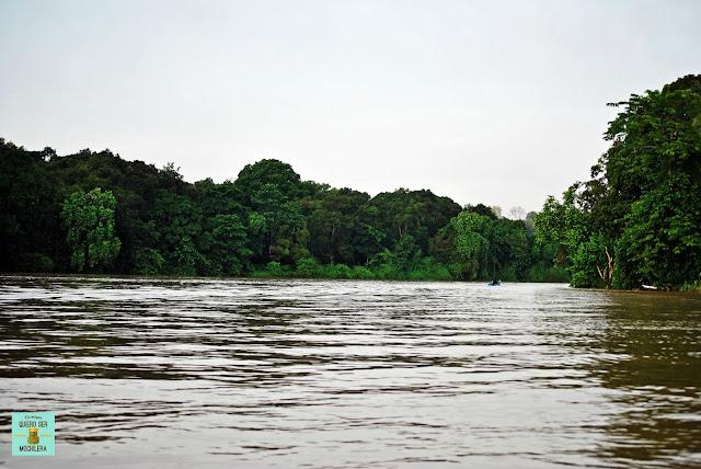 Río Kinabatangan, Borneo (Malasia)