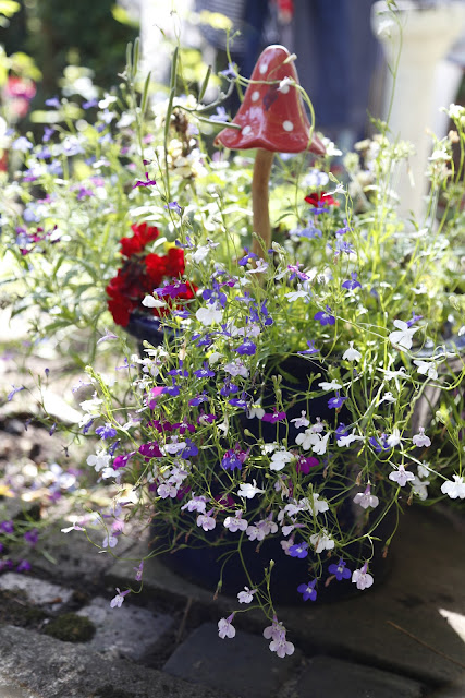 Mixed Colour Lobelia in White, Purple & Blue in Pot with Toadstool Windchime