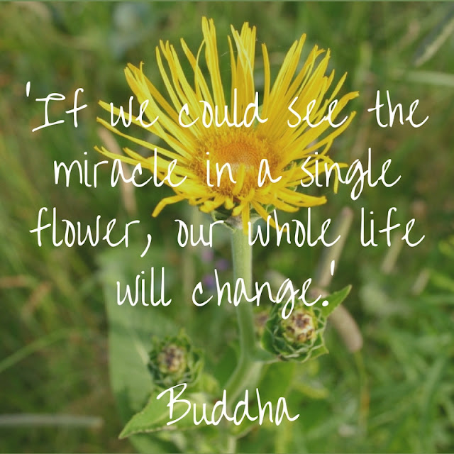 If we could see the miracle in a single flower, our whole life will change. Buddha