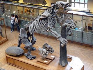 Esqueleto perezoso gigante