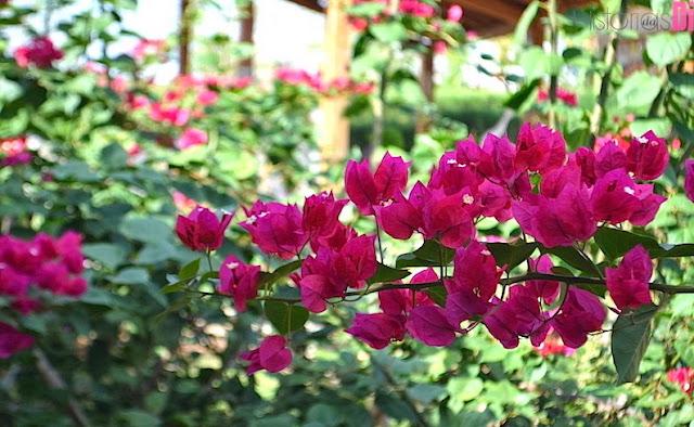 Pedra do Sino Hotel - lindas flores espalhadas