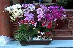 hoa lan nguyen phan