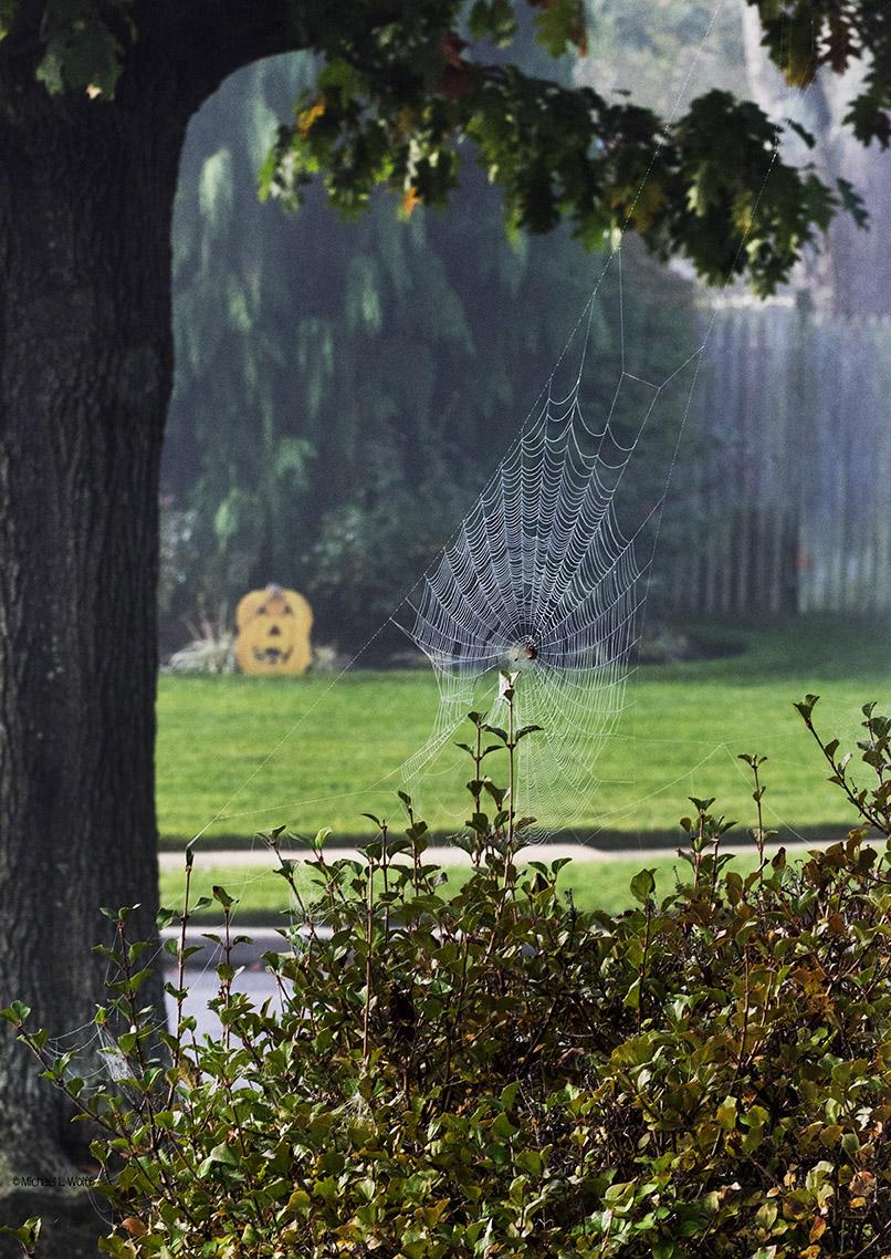 spider web and pumpkin