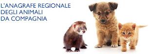 Anagrafe degli animali: perché il microchip è importante e come fare