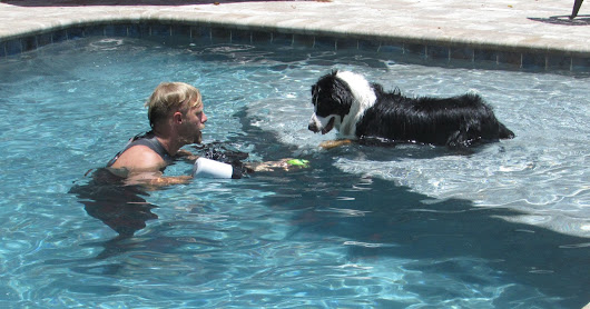 Life With Beagle: Underwater dogs: An afternoon with Seth Casteel