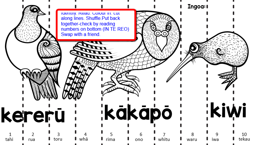 Colouring Pictures Of Kiwi Birds : Thetereom oriclassroom manu maaori our native birds