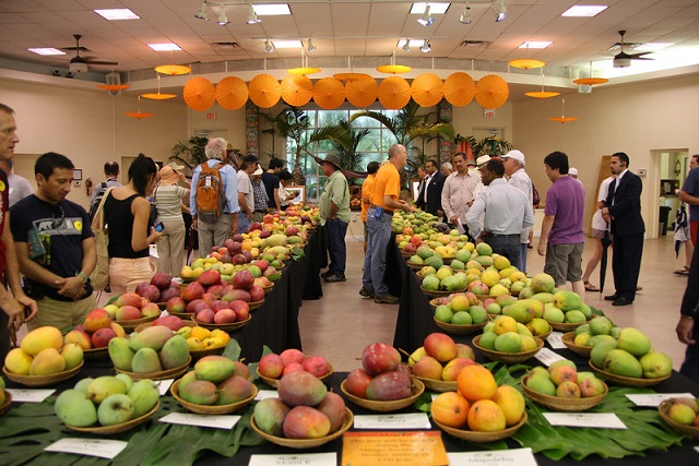 International Mango Festival in Delhi