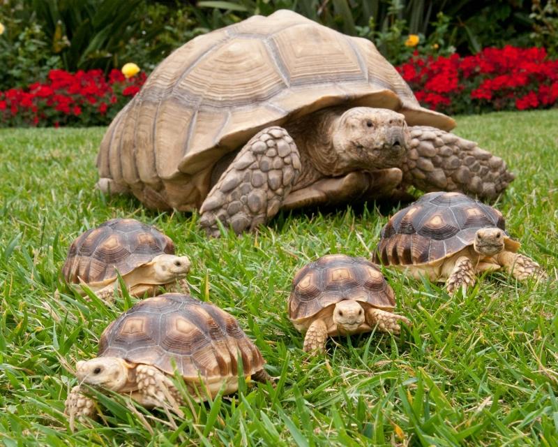 Resultado de imagen para tortugas de tierra