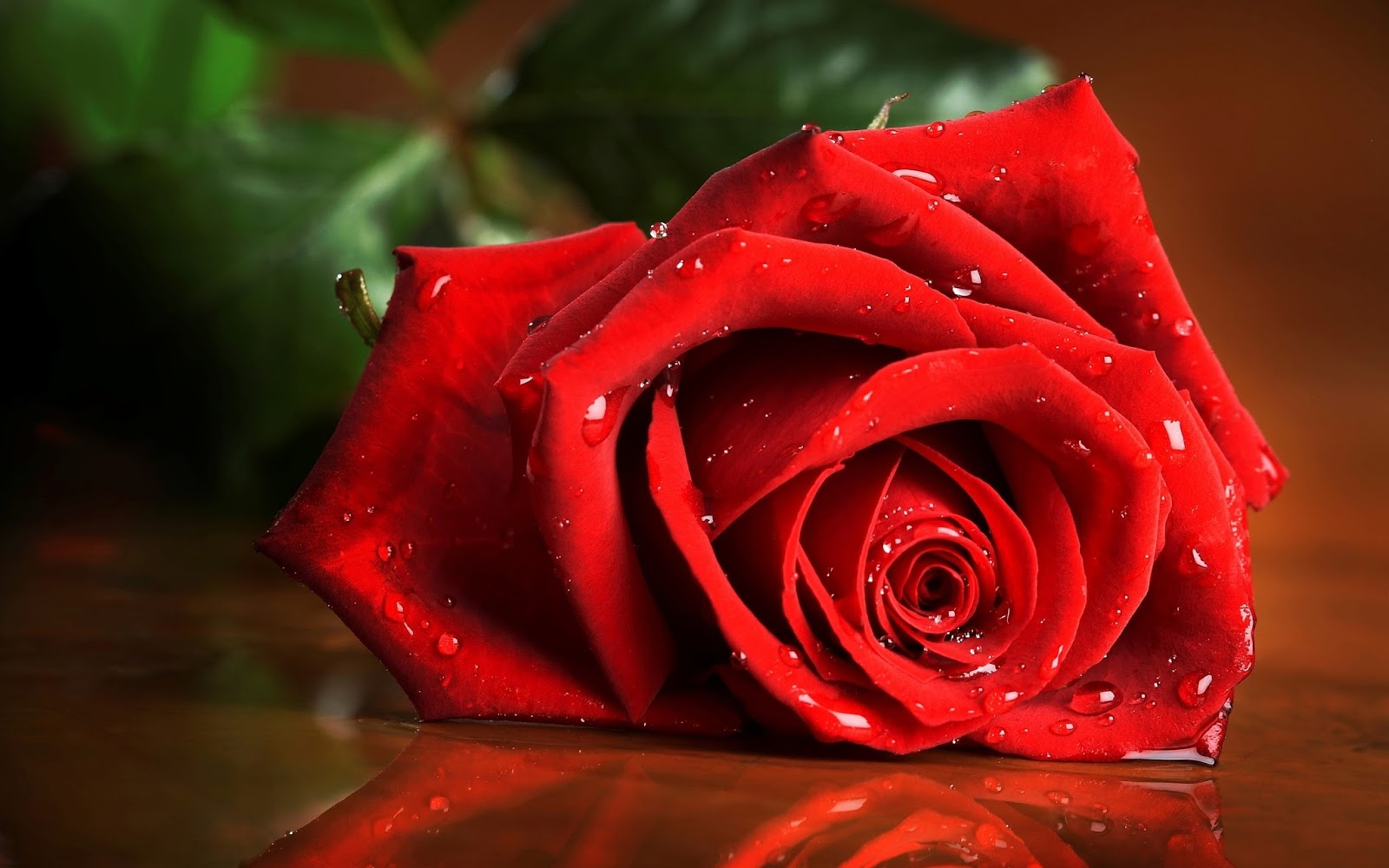 Best Red Roses Wallpapers Natural Full HD Download Free