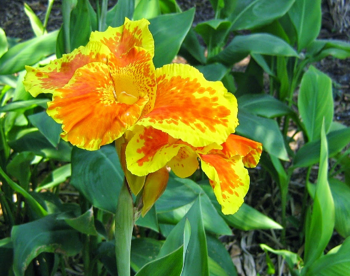 Benefits And Flowers Kana