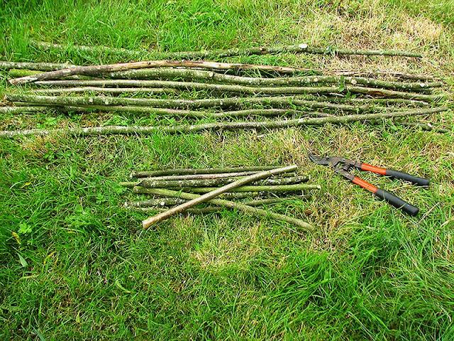 Branches coupées pour faire des tuteurs à tomates