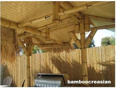 2 Dia Bamboo Poles 12 Ft 4 8 3 10 Timer Solid Hardest Max Thick Wall Of