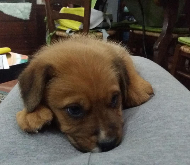 Adotta un cane a siracusa cucciolo di 1 mese e mezzo - Cane occhi azzurri ...