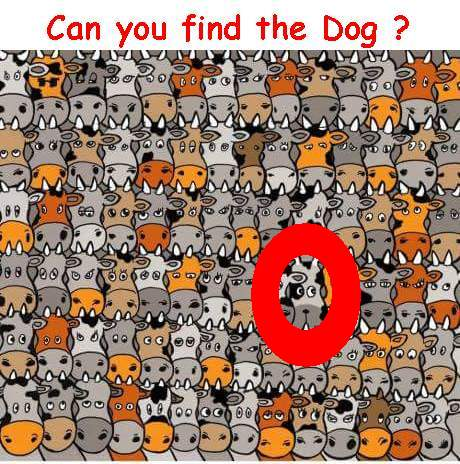 Can you find the Dog answer