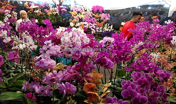 Orchids at Royal Floria