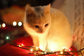 A white kitten sits next to a string of Christmas lights, on a red cushion. The kitten is looking at the lights.