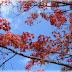 Το φθινόπωρο είναι μια δεύτερη άνοιξη