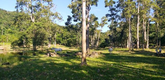 Parque Arqueológico e Ambiental de São João Marco é cercado de muito verde