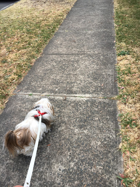 Going for a walk with Chanel