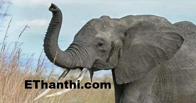 மனிதன் வாழ யானைகள் அவசியம் - ஏன்?   Man is essential for living elephants.. why?