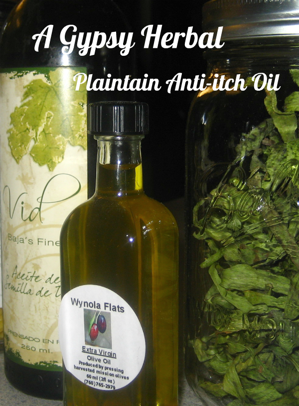 DIY Plantain Anti Itch Oil