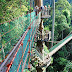 Canopy Walk at Danum Valley Sabah