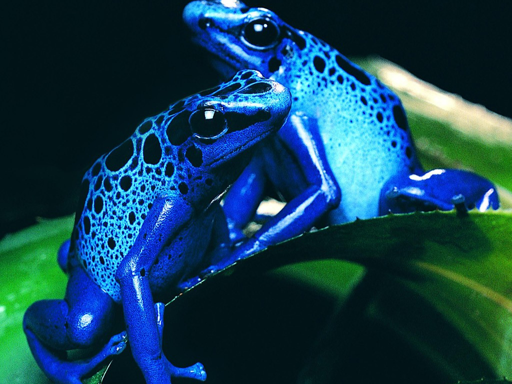 Free high definition wallpapers colorful frog wallpapers and backgrounds free download - Wallpaper definition ...